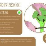 Brokkoli_einzeln_RZ18