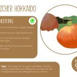 Hokkaido_einzeln_RZ19