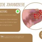 Johannisbeere_einzeln_RZ20