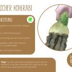 Kohlrabi_einzeln_RZ3
