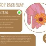 Ringelblume_einzeln_RZ29