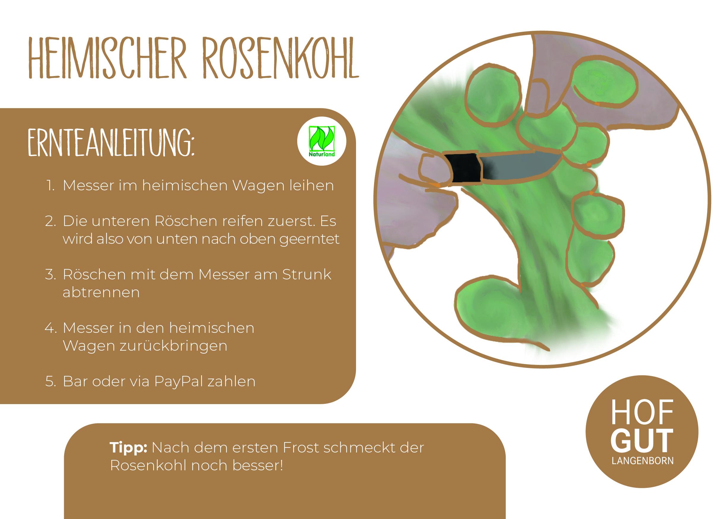 Rosenkohl_einzeln_RZ24