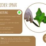 Spinat_einzeln_RZ21