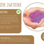 Zwetschge_einzeln_RZ26