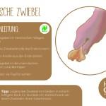 Zwiebel_einzeln_RZ8